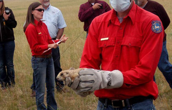 Rodent SAR Wyoming training programme
